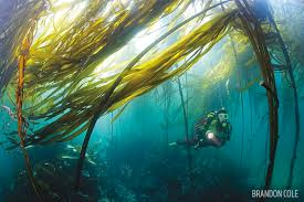 Washington snorkeling images Scuba diving olympic national park washington scuba diving jpg