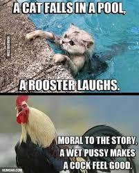 Funny Feel Good Memes - 156 best animal memes images on pinterest animal memes funny