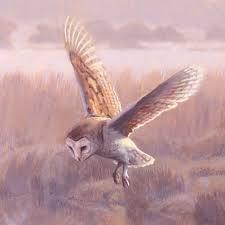 barn owl pictures paintings in progress by martin ridley