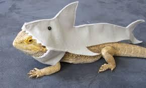 shark halloween costume great white shark costume for bearded dragons shown on
