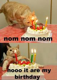 Cat Birthday Memes - 100 ultimate funny happy birthday meme s my happy birthday wishes