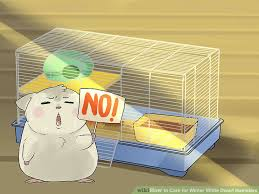 5 ways to care for winter white hamsters wikihow