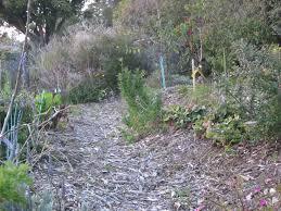 walk in a food forest benicia community gardens