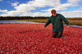 Cranberry Island Kitchen by Seeing Red Take A Trip To Wisconsin U0027s Cranberry Marshes Inforum