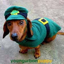 Halloween Costumes Wiener Dogs 374 Dachshunds Costume Images Dachshunds