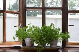 diy herb garden surprising windowsill herbs designs windows herb garden 35
