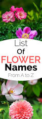 List Of Tropical Plants Names - list of flower names from a to z gardening channel