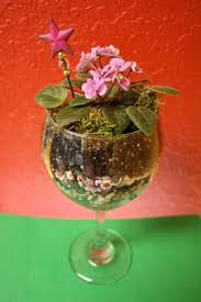 plant your own mini terrarium