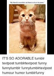 Funny Cat Memes Tumblr - 25 best memes about munchkin cat munchkin cat memes