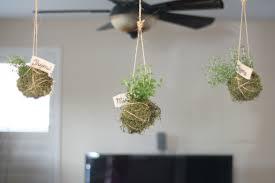 hanging indoor herb garden gardening ideas