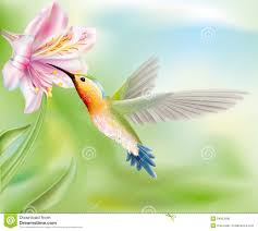 hummingbird in the flower royalty free stock photos image 34903598