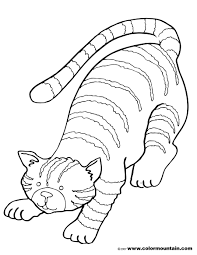 tabby cat coloring create a printout or activity