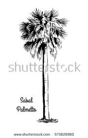 palmetto tree stock images royalty free images u0026 vectors
