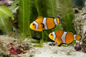 why aquarium can help ease stress archives dailypedia