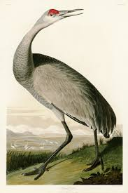compare prices on crane bird picture online shopping buy low