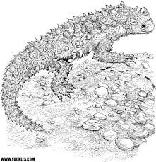 desert lizard coloring page horned lizard coloring page by yuckles