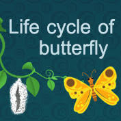 life cycle of bees biology for kids mocomi