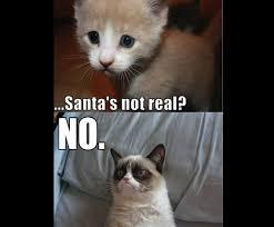 Grumpy Cat Photo 1 Best - 2012 s best of grumpy cat christmas gallery ebaum s world