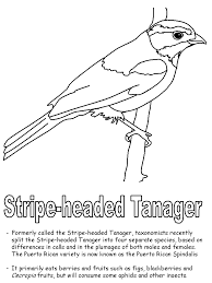 stripe headed tanager coloring page
