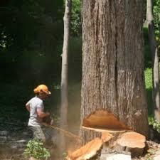 big tree service bucksport me reviews 773 river rd