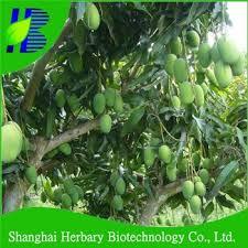 Mango Boom sterk adapability fruit mango boom boom zaden zaden voor de teelt