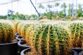 cactus tree shop with in the house for sale selective