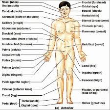 Anatomy And Physiology Chapter 1 Review Answers Anatomy And Physiology Chapter 1 Test Human Anatomy And Physiology