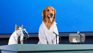 Pet Pet Researchers Confirm 100 Of Owners Who Leave For Work Never