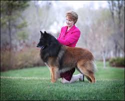 belgian sheepdog canada canuck dogs your source for canadian dog event information online