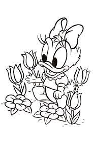 daisy duck coloring pages overview with cool daisy sheets