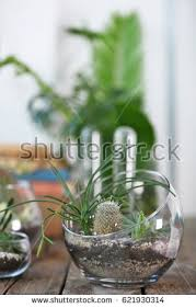 mini succulent garden glass terrarium on stock photo 596440994