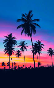 25 trending palm trees ideas on palms tropical and