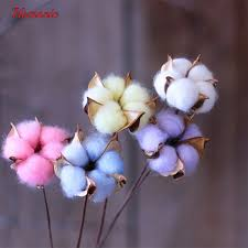 cotton flowers dried cotton flower with stem diy crafts homonic