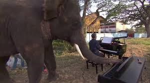 Blind Men And The Elephant Story For Children Music For Elephants How Paul Barton Is Apologizing To Blind