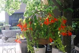 Best Plants For Hanging Baskets by Hanging Baskets Dirt Simple