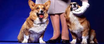 queen elizabeth dog royal pets not only corgis bridgeman blog