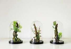 the new terrarium 6 top trends for 2018 gardenista