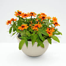 large wall planter promotion shop for promotional large wall