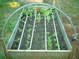 drip irrigation for square foot gardening