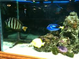 Asian Themed Fish Tank Decorations Fish Tanks Feng Shui And Chinese Food In Dallas Claudia Looi