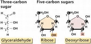 Table Sugar Formula Chemistry Ii Water And Organic Molecules