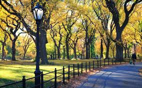 central park thanksgiving the one trick you need to know before visiting central park
