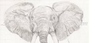 drawing elephants