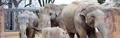 Wild Lights Denver Zoo by World Elephant Day Denver Zoo