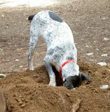 let u0027s talk about digging thedogtrainingsecret com