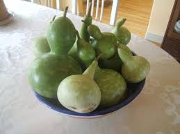 125 best gardening gourds images on gourd gourd