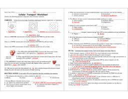 studylib net essys homework help flashcards research papers