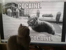 So Much Cocaine Meme - so much cocaine