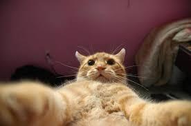 Popular Memes 2013 - johnny catsvill popular internet meme