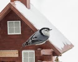 great backyard bird count marks its 20th year audubon